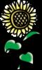 sunflower@Blog